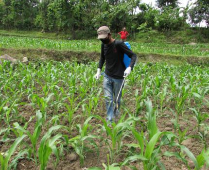 Farmer to Farmer (F2F) approach for sustained livelihood